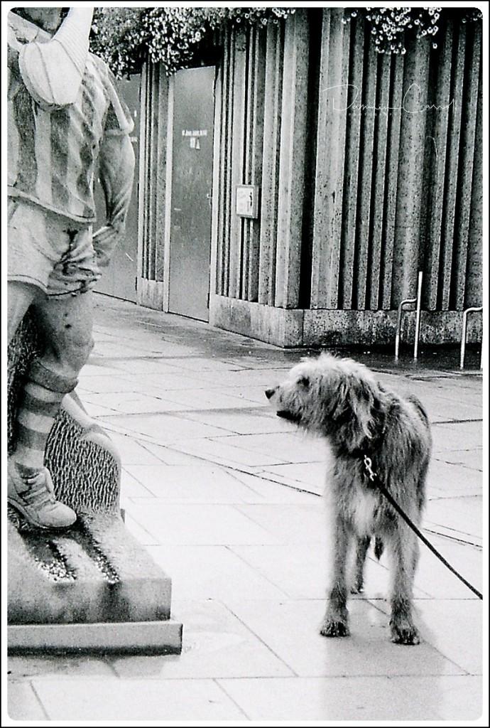 Photograph of Irish Wolf Hound in Kilkenny